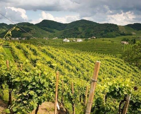 Alla scoperta dei vini di Treviso